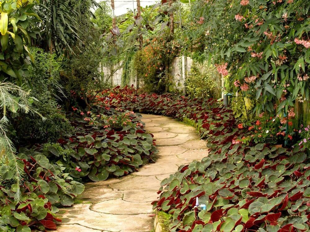 Garden Path   Home watch services
