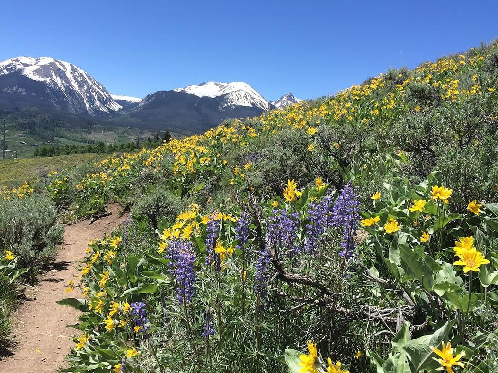 mountain view   Peak property management